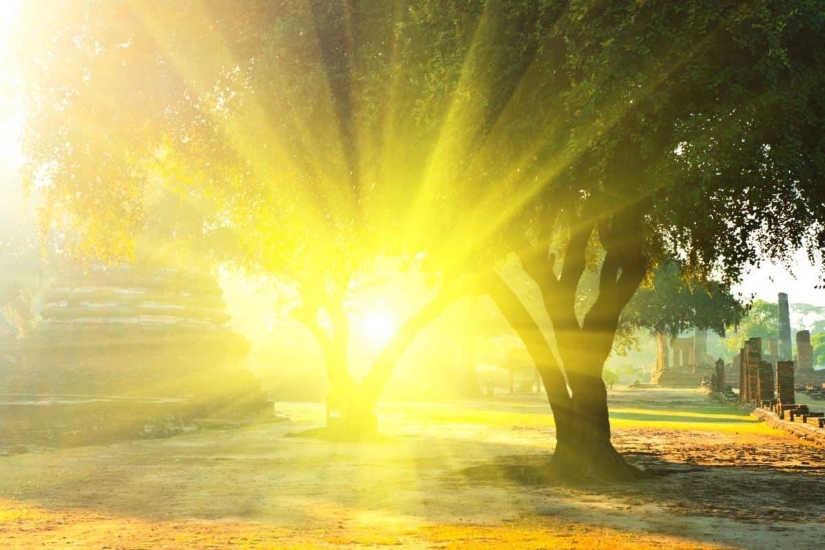 Shine rays shining through trees