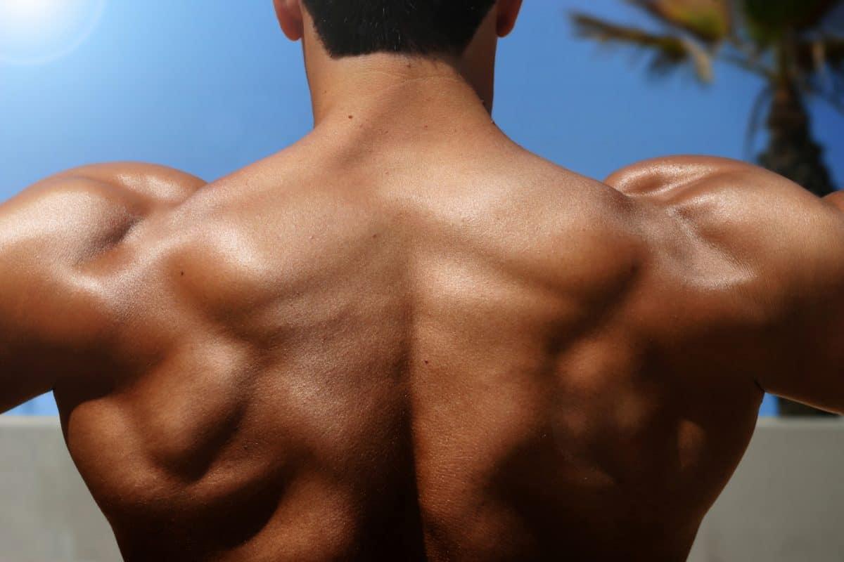 back muscles of bodybuilder