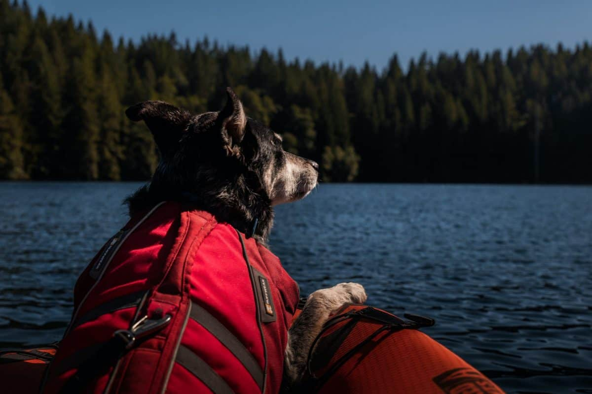 Dog wearing a life jacket sitting in a kayak