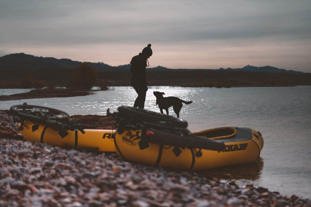 Dog being trained to enter kayak