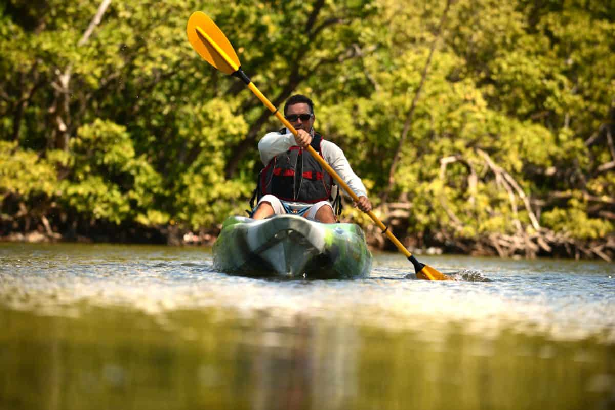 man kayaking in florida alligator country with mangroves lining the water