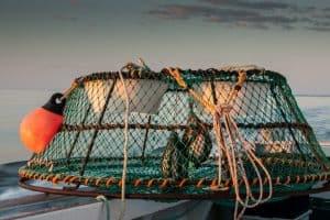 Kayak Crabbing Tips: Your Guide To Crabbing From A Kayak