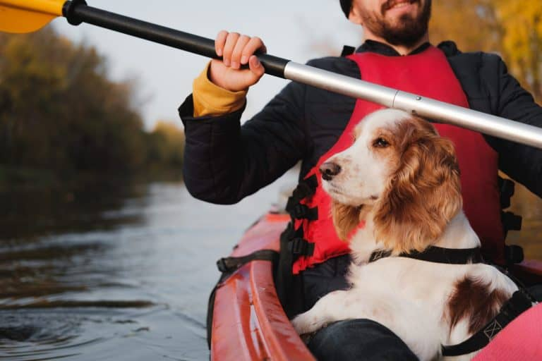 Man paddling kayak with his spaniel dog