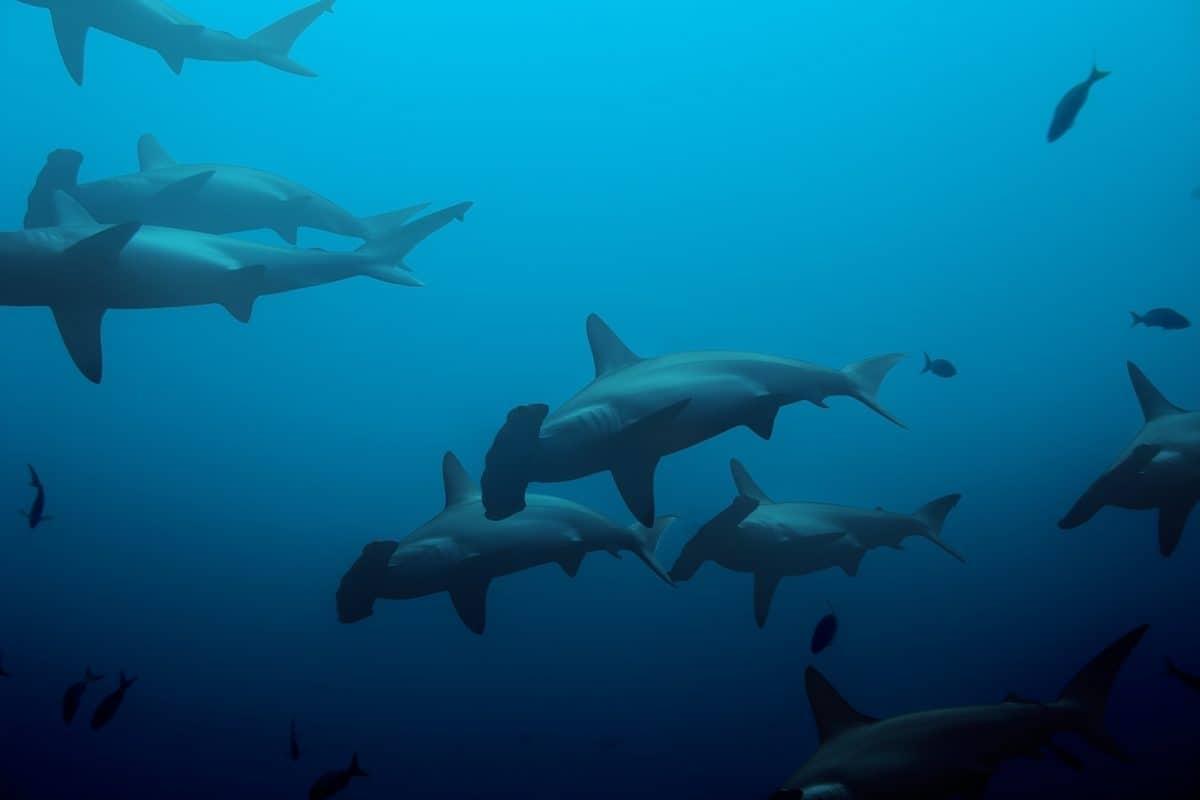 Large hammerhead sharks