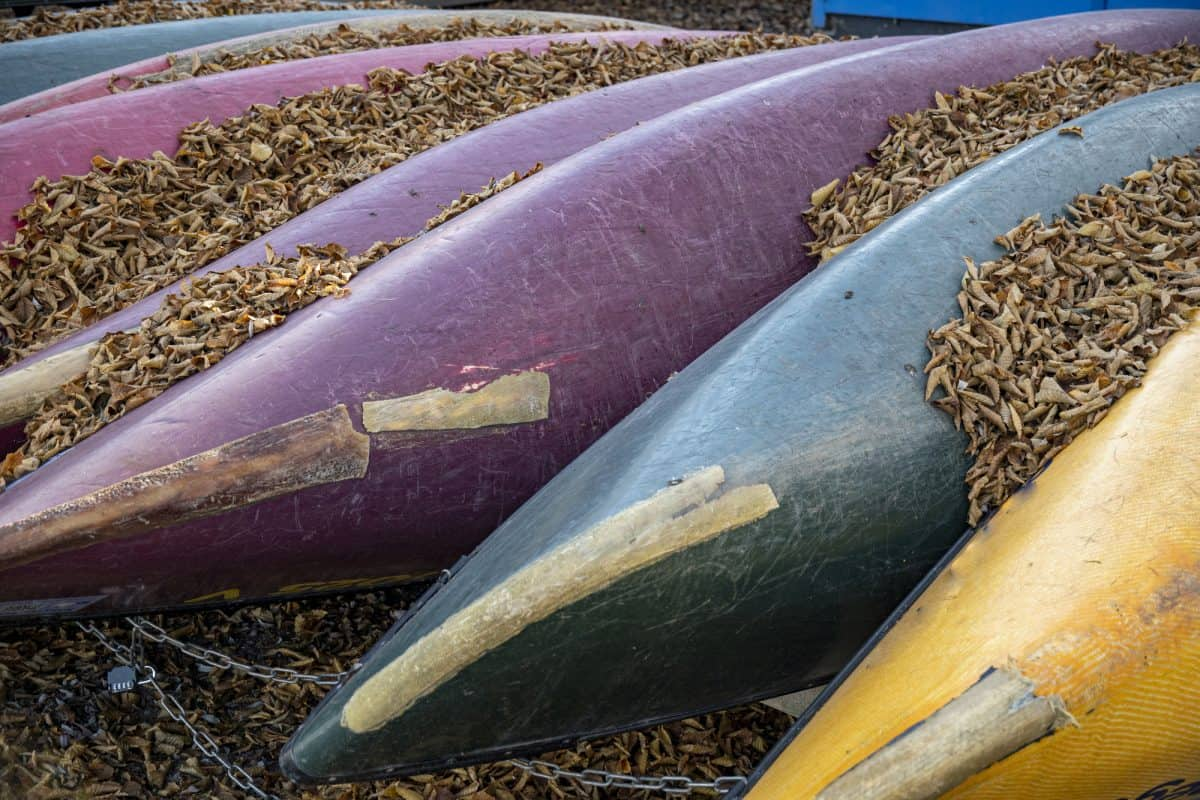 Canoes of different colours covered with foliage